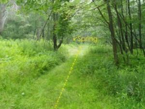 S_springtrail